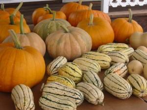 pumpkin-harvest3